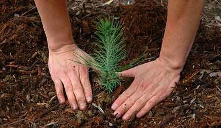 ۱۰ اصل مهم درختکاری و حفظ جنگل ها