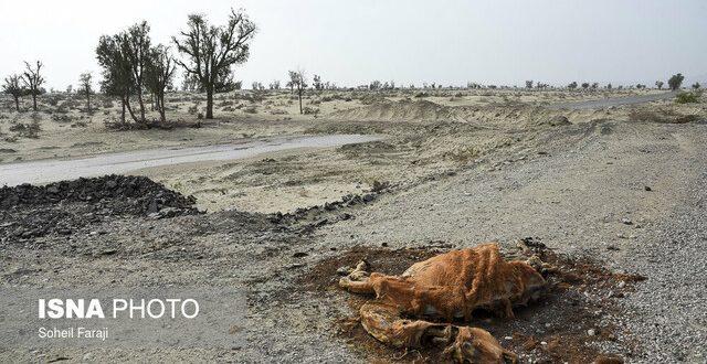 خشکسالی بیسابقه در مناطقی از کشور/هشدار به مسئولان آب