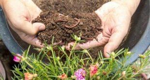 تاثیر کمپوست خانگی بر غنی کردن خاک