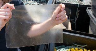 تولید پلاستیک سازگار با محیط زیست از زائدات شیلات