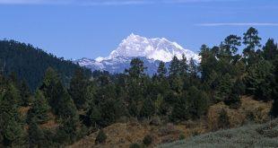 گروه های آزاد بلای جان کوهنوردی البرز شده است