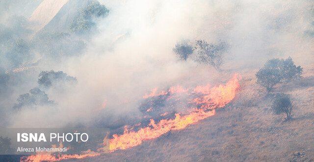 باور غلطی که جنگلها را طعمه آتش میکند