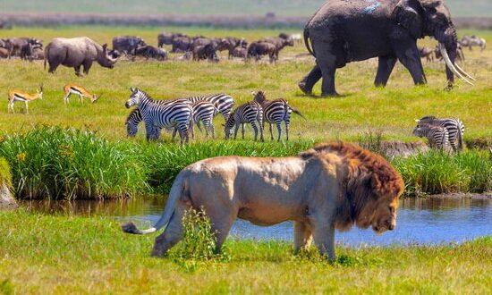 افزایش بیش از ۱.۵ درجه دمای هوا، تهدید جدی برای گونه های حیاتیِ زمین