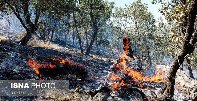 فقر اجتماعی و معیشتی موثر در آتشسوزی جنگلها