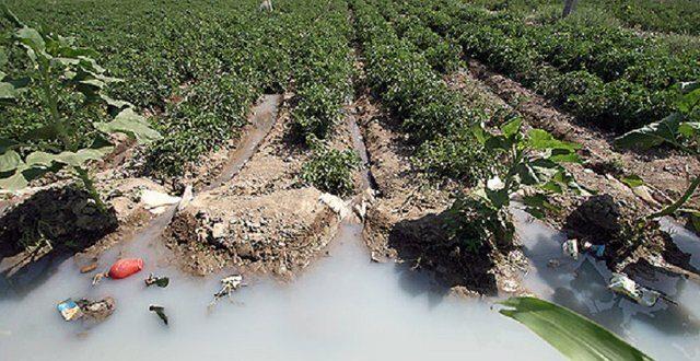 برخی به خاطر بی آبی به کشاورزی با فاضلاب روی آوردهاند!